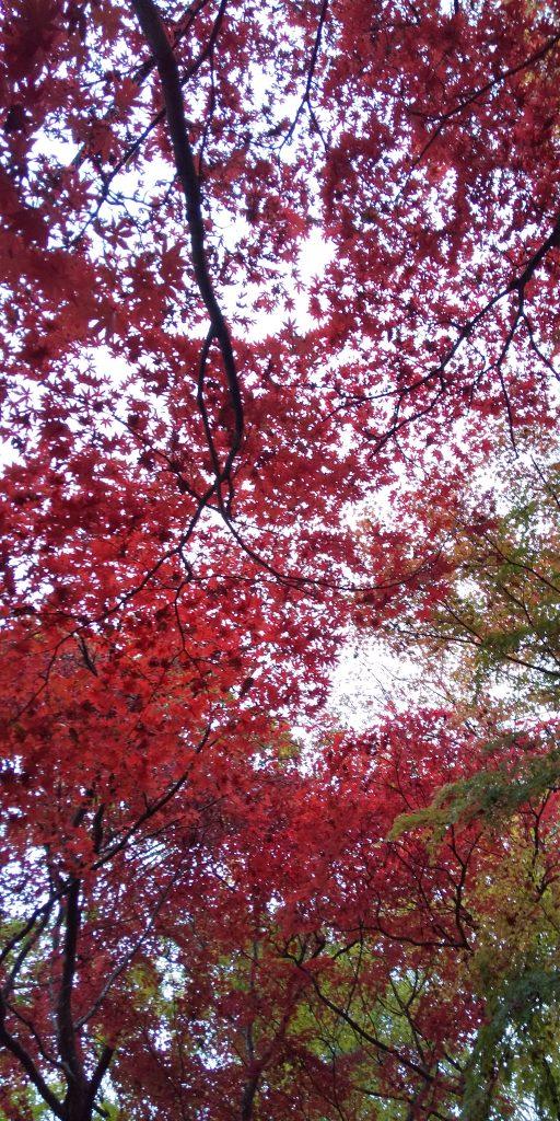 あっという間に秋から冬