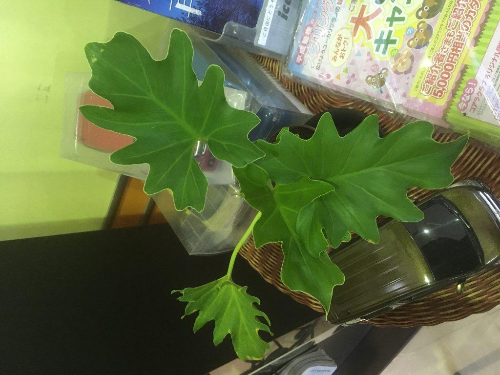 すごい植物たち
